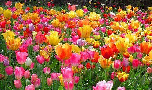Easter Floral.jpg